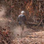 Ação Ampara Silvestre em área de queimada: Crédito: Pedro Becker